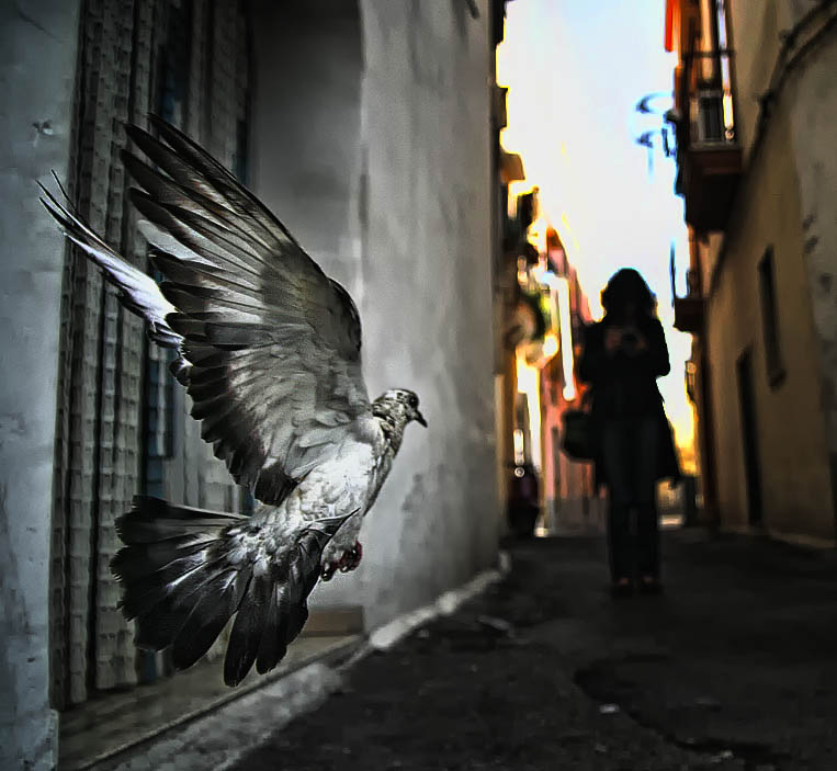 Dove by Chris-Lamprianidis