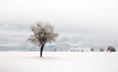 White Winter by Chris-Lamprianidis