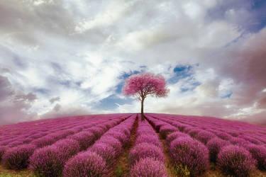 Deep purple by Chris-Lamprianidis