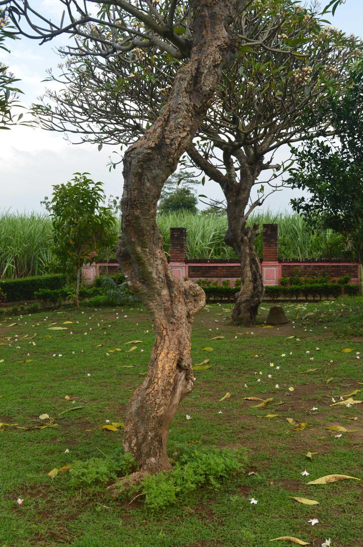 Frangipani Tree2 By Adipancawh by Adipancawh