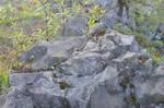 Stone4 By Adipancawh