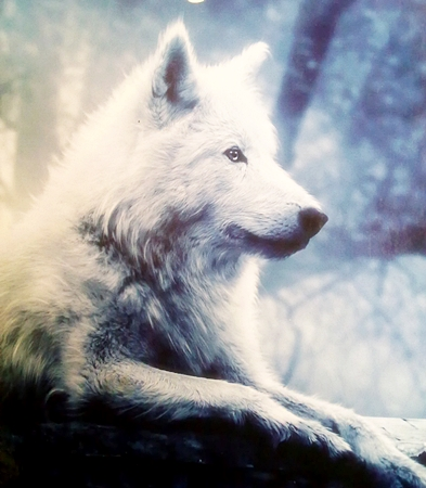 Magic wolf wallpapers - photo#20