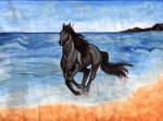 Horse AT