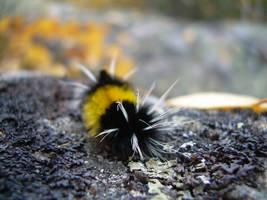Caterpillar 2 by sabby64
