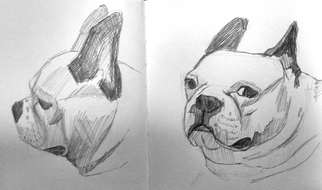 Boston Terrier Sketch by StylishKira