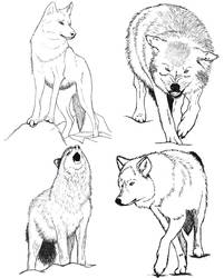 Wolf Sketches Finals