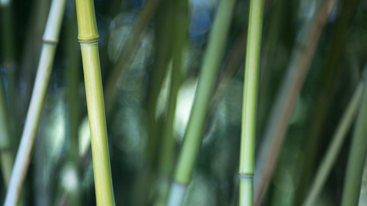 Nawak Bamboo Wallpaper by Pierre-Lagarde