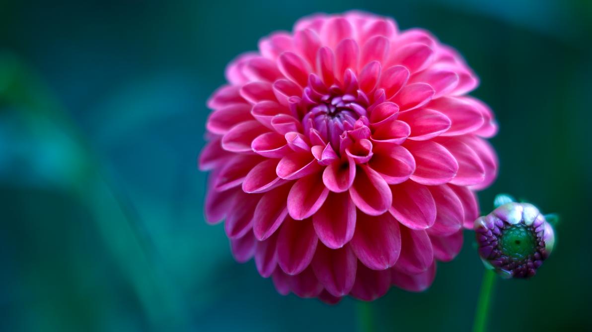 Nawak Flower Wallpaper by Pierre-Lagarde