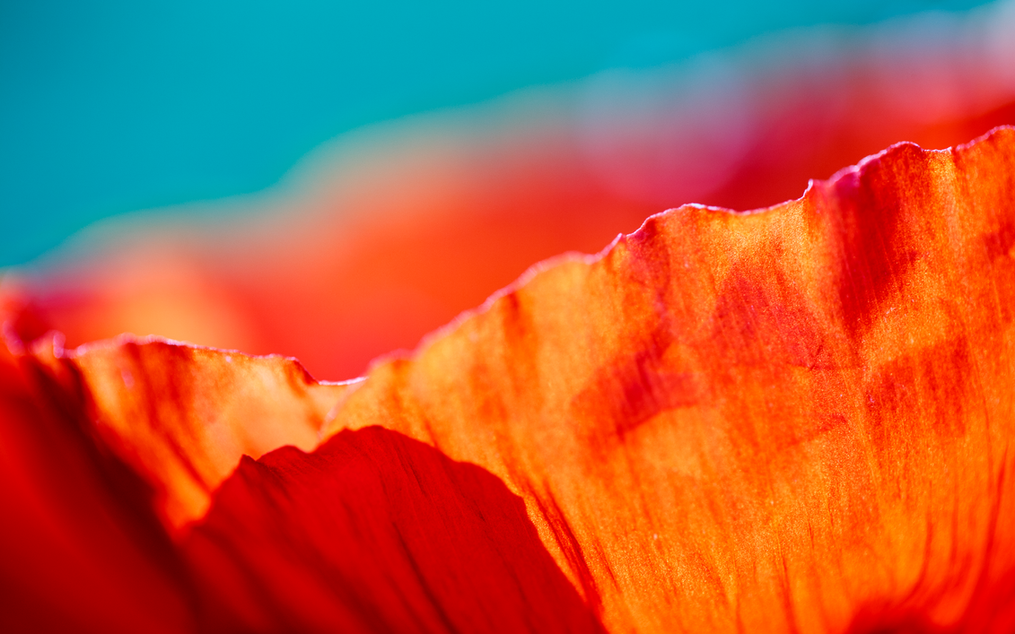 Flower Eruption Wallpaper by Pierre-Lagarde