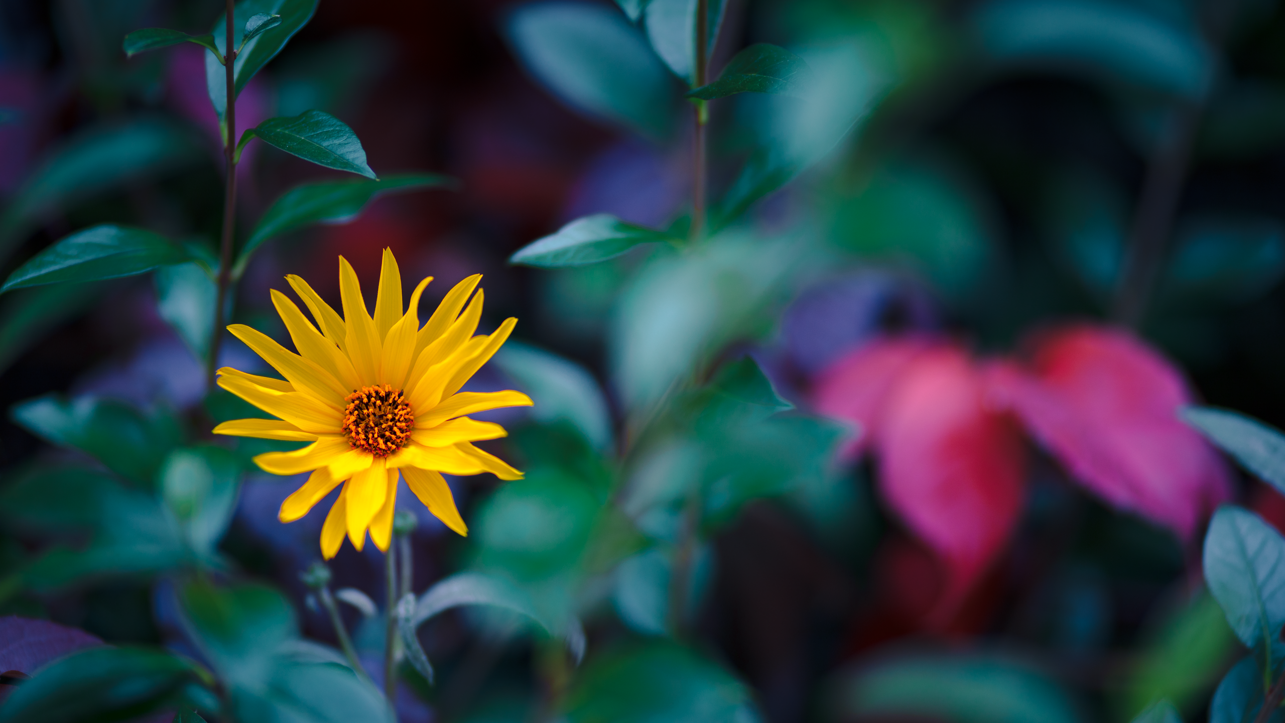 fall flowers wallpaper by - photo #21