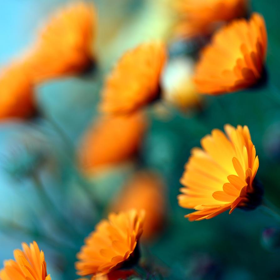 Softness Spring 2 by Pierre-Lagarde