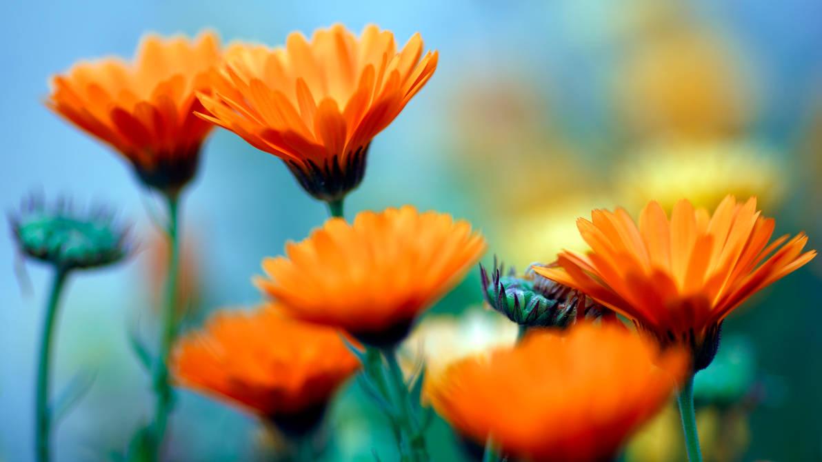 Softness Spring Wallpaper by Pierre-Lagarde