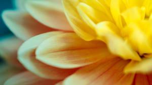 Multicolor Feeling Flower Wallpaper