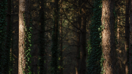 Deep Forest Light Wallpaper 1 : The Door