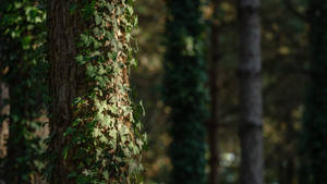 Deep Forest Light Wallpaper 2 : The Hair
