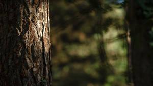 Deep Forest Light Wallpaper 3 : The Skin