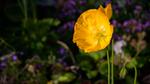 Nawak Flower Wallpaper 6 by Pierre-Lagarde