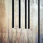 Black Stripes by Pierre-Lagarde