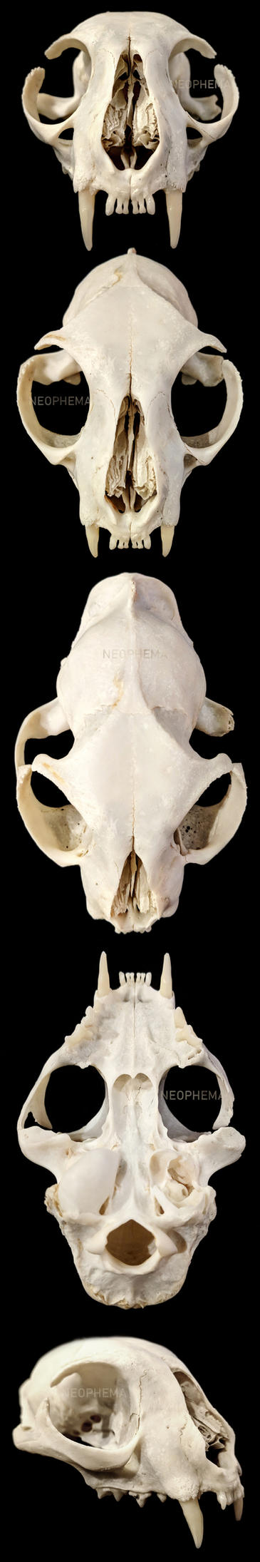 Cat Skull by LeFreaks