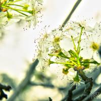 Flourish by Roscoe13mmh