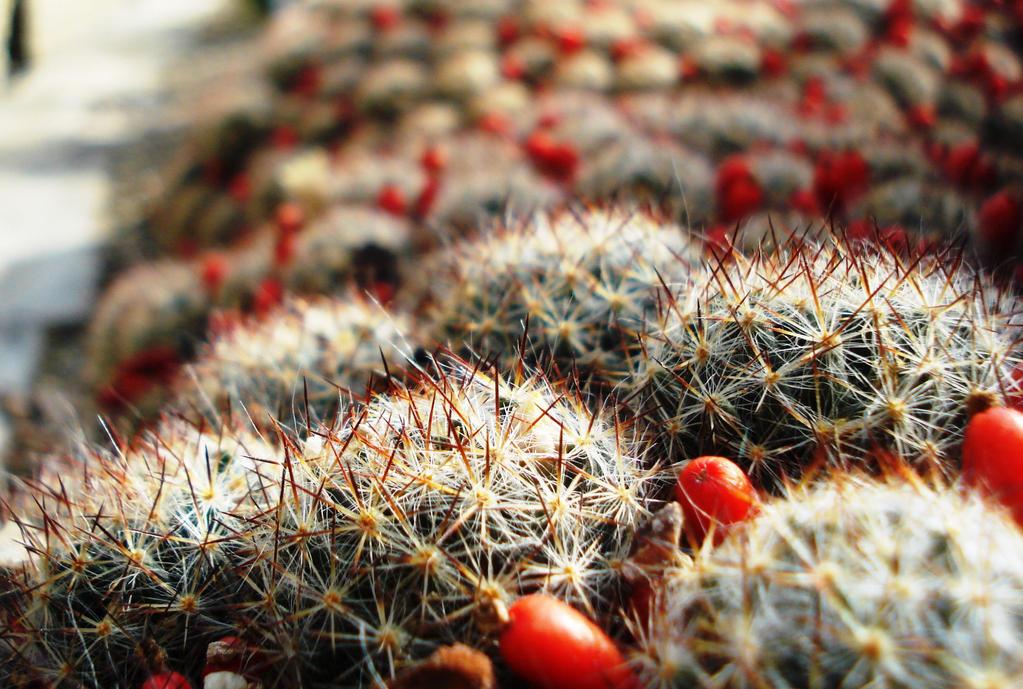 Cactus by Polin-Sam