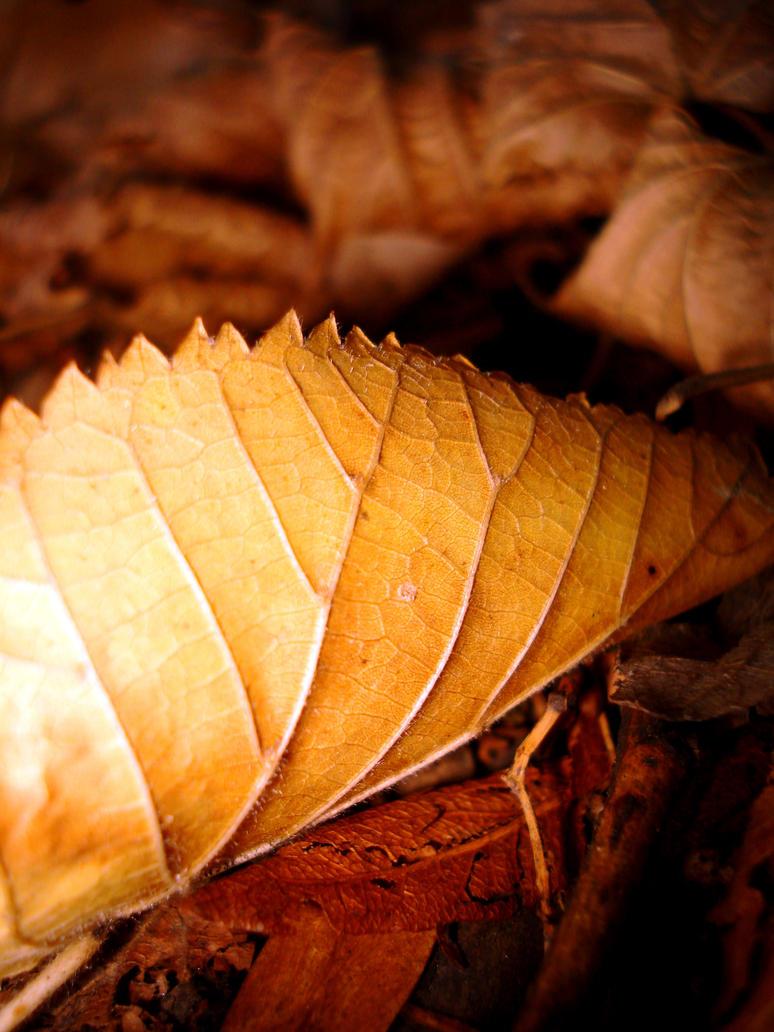 Autumn time by Polin-Sam