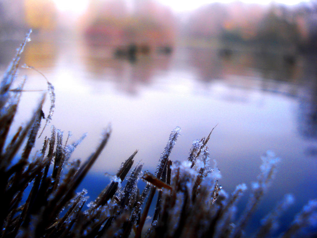 Cold November by Polin-Sam