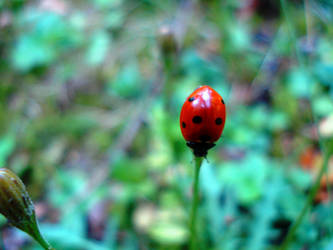 Ladybug in green by Polin-Sam