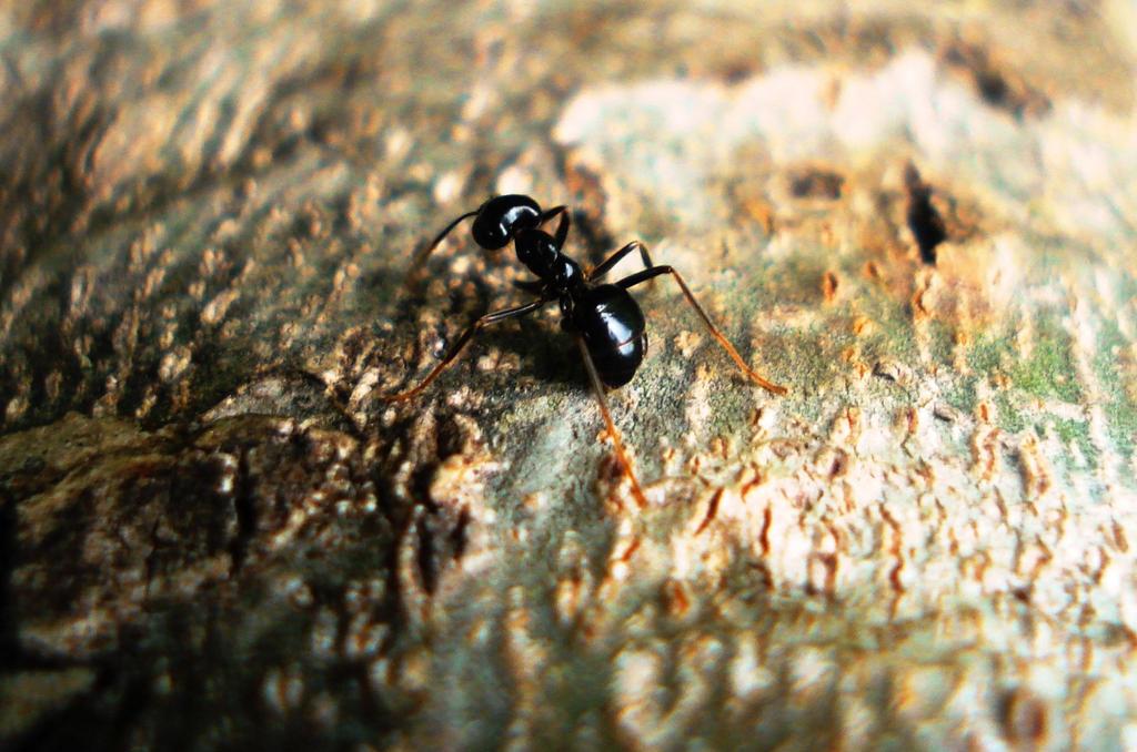 Ant world by Polin-Sam