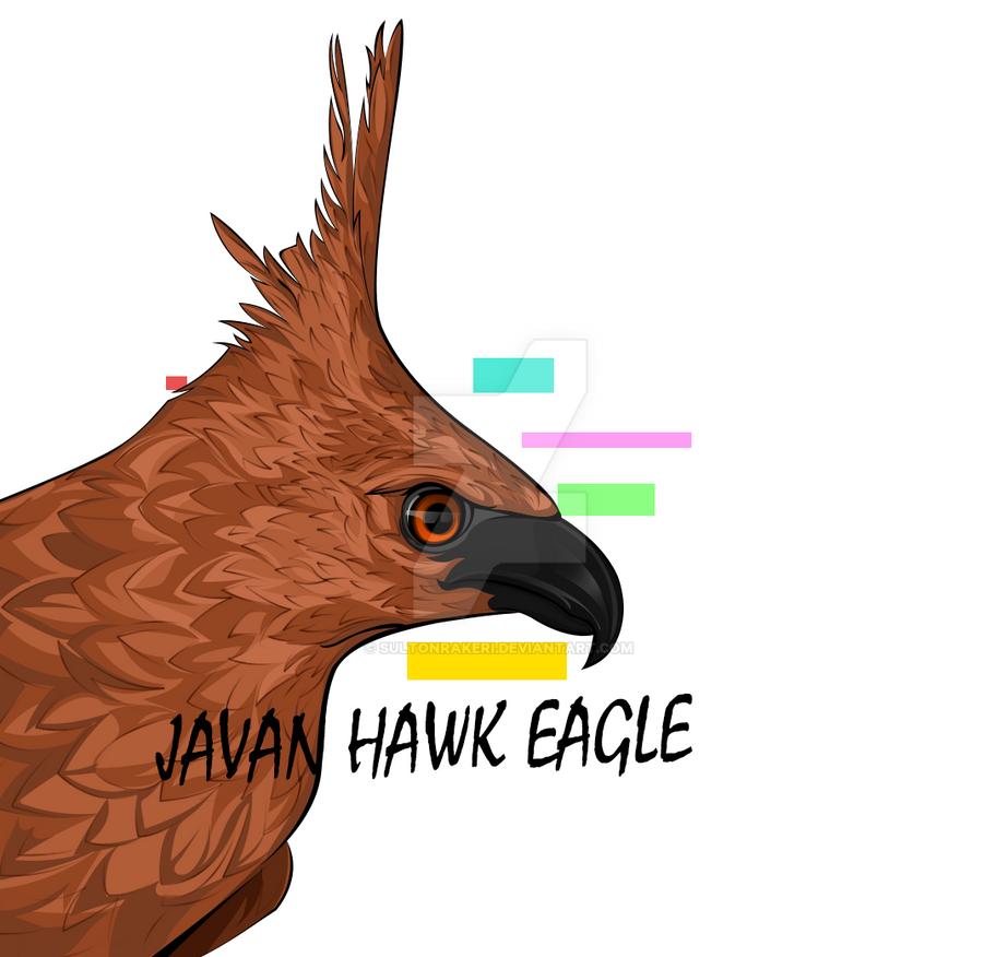Tmp 3105-javan-hawk-eagle-3384039254 by sultonrakeri