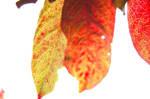 pretty leaves