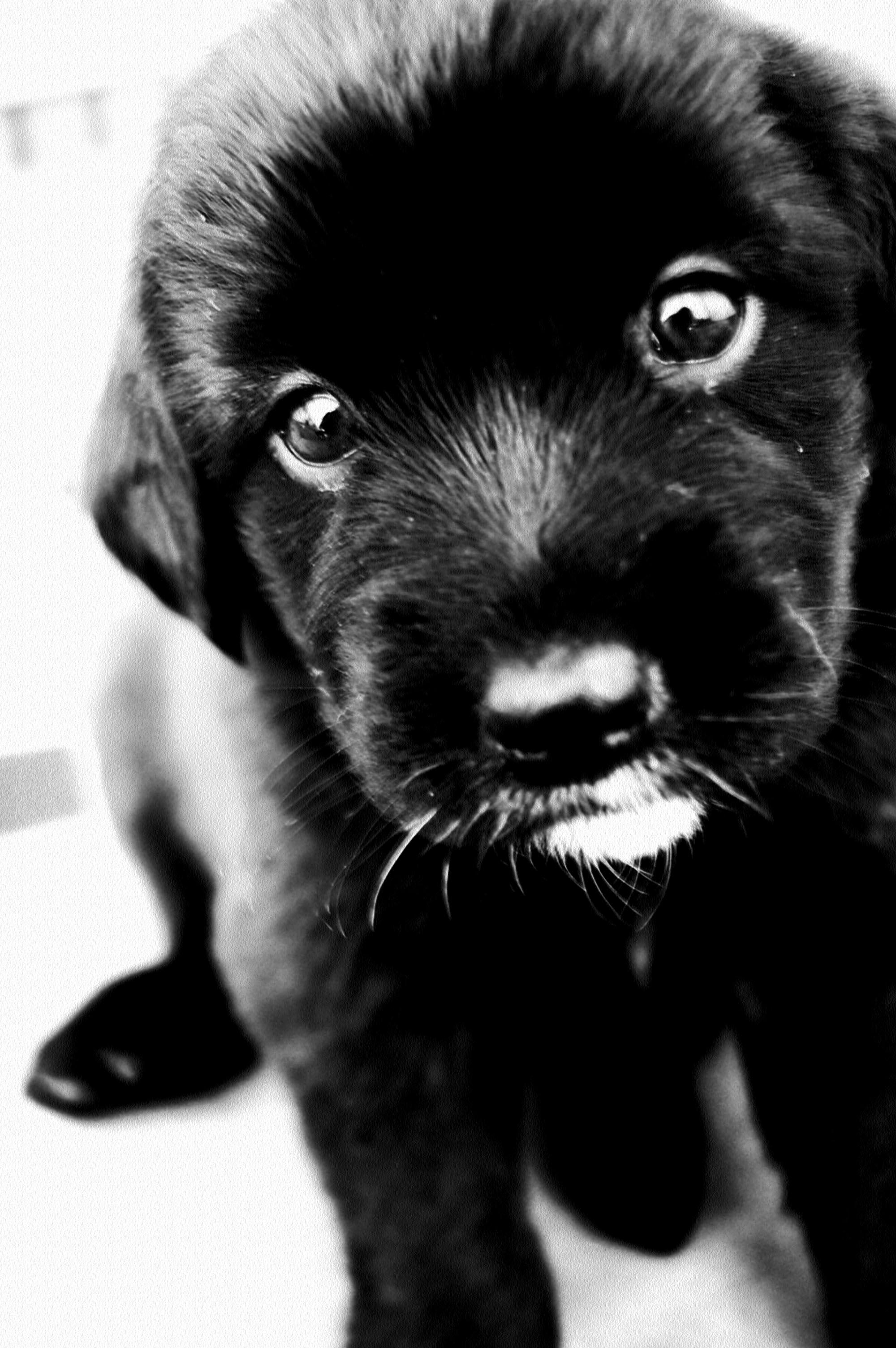 Maisy's Puppies Numero dos.