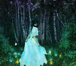 Night in the magic forest