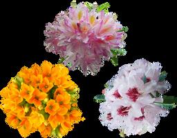 Stock Flowers1 by IgnisFatuusII