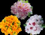 Stock Flowers1