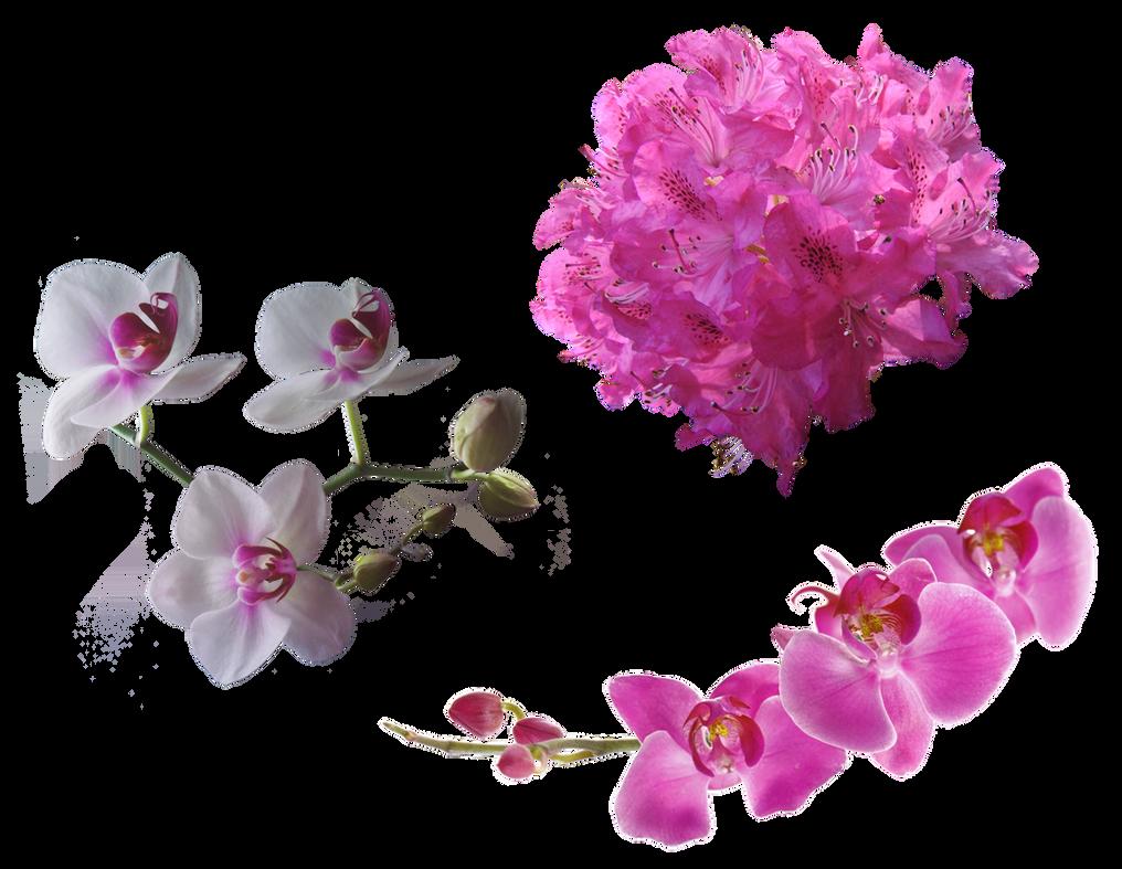 Stock flowers2 by ignisfatuusii on deviantart - Arbustos con flores ...