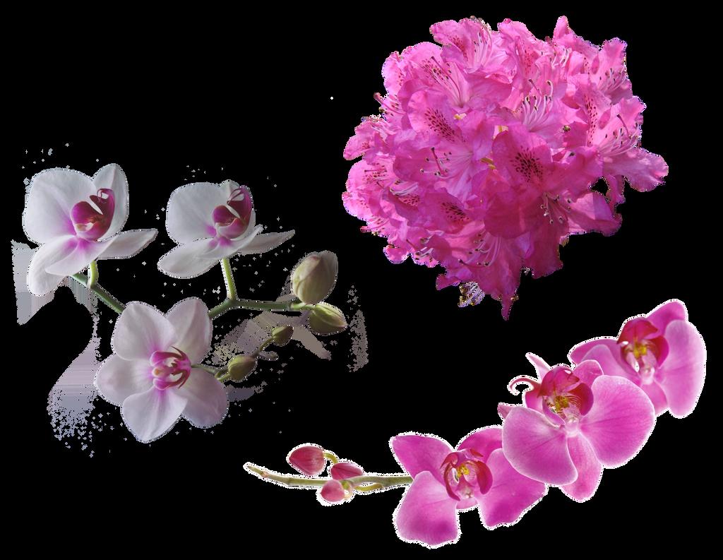 Stock Flowers2 by IgnisFatuusII