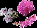 Stock Flowers2