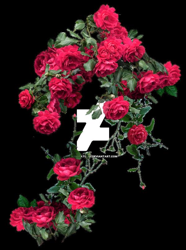 Flowers Plants favourites by DreamDancer84 on DeviantArt