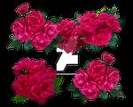 Roses 4 - Stock