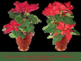 Christmas star-flowers-stock. by IgnisFatuusII