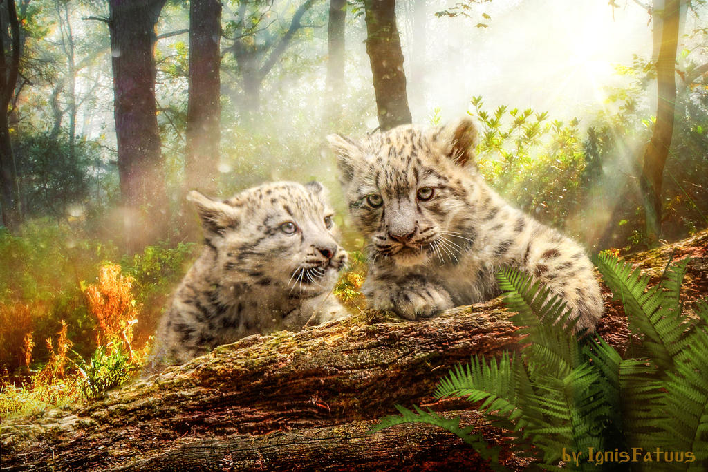 Snow Leopards by IgnisFatuusII