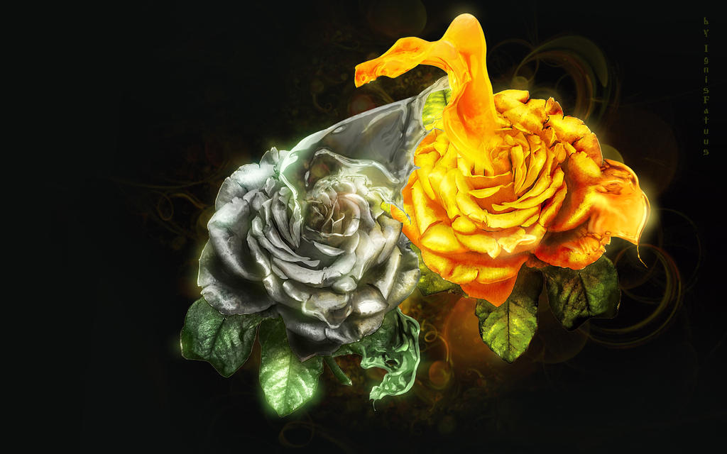 Two roses by IgnisFatuusII