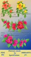 Flowers stock3 by IgnisFatuusII