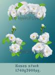 White Roses 5