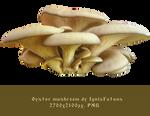 Oyster mushroom stock-by IgnisFatuus