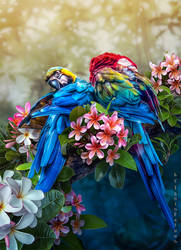 Preen one's feathers by IgnisFatuusII