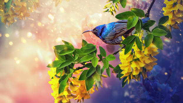 BirdWallpaper