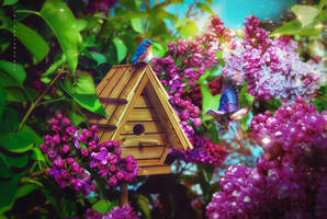 Building a family nest