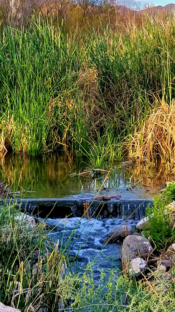 Clark County Wetlands 1 by Angelica777